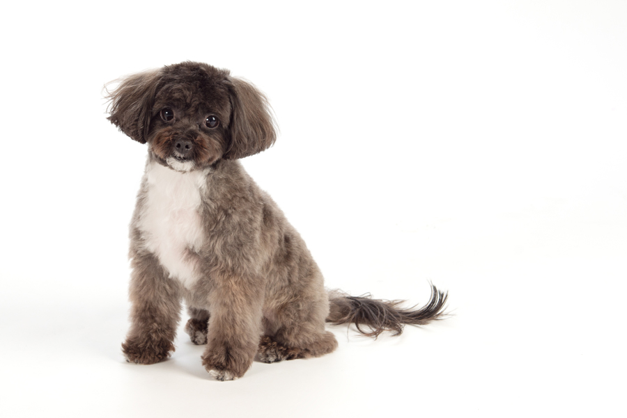 DelGreco Real Estate Team - Dogs - Charlie