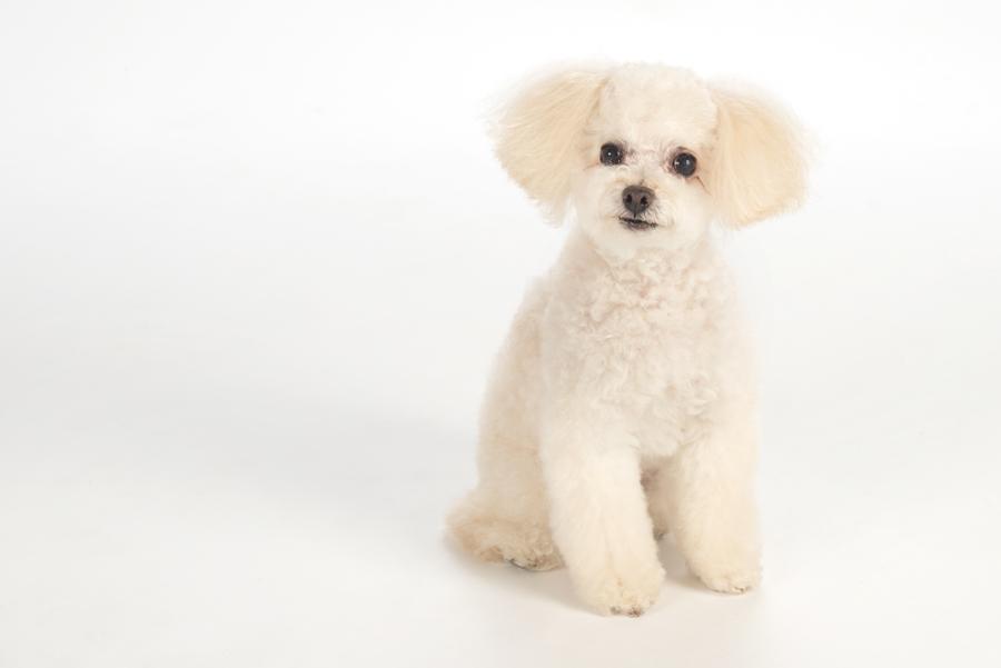 DelGreco Real Estate Team - Dogs - Pierre