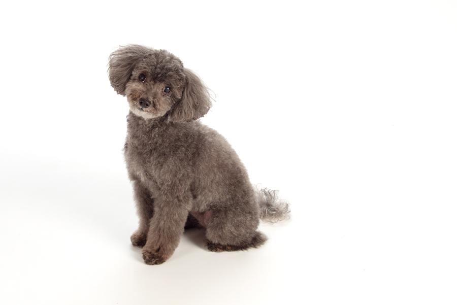 DelGreco Real Estate Team - Dogs - Tess